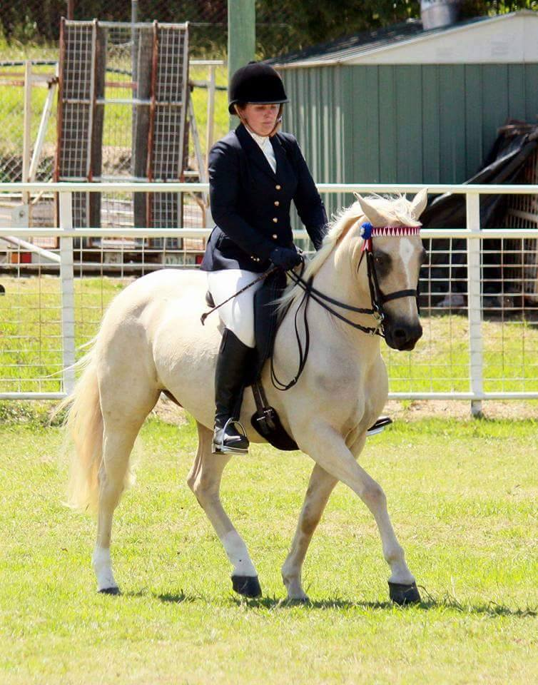 Naryilco Laila, Waler mare, competing in the ridden classes at Warwick Show 2016