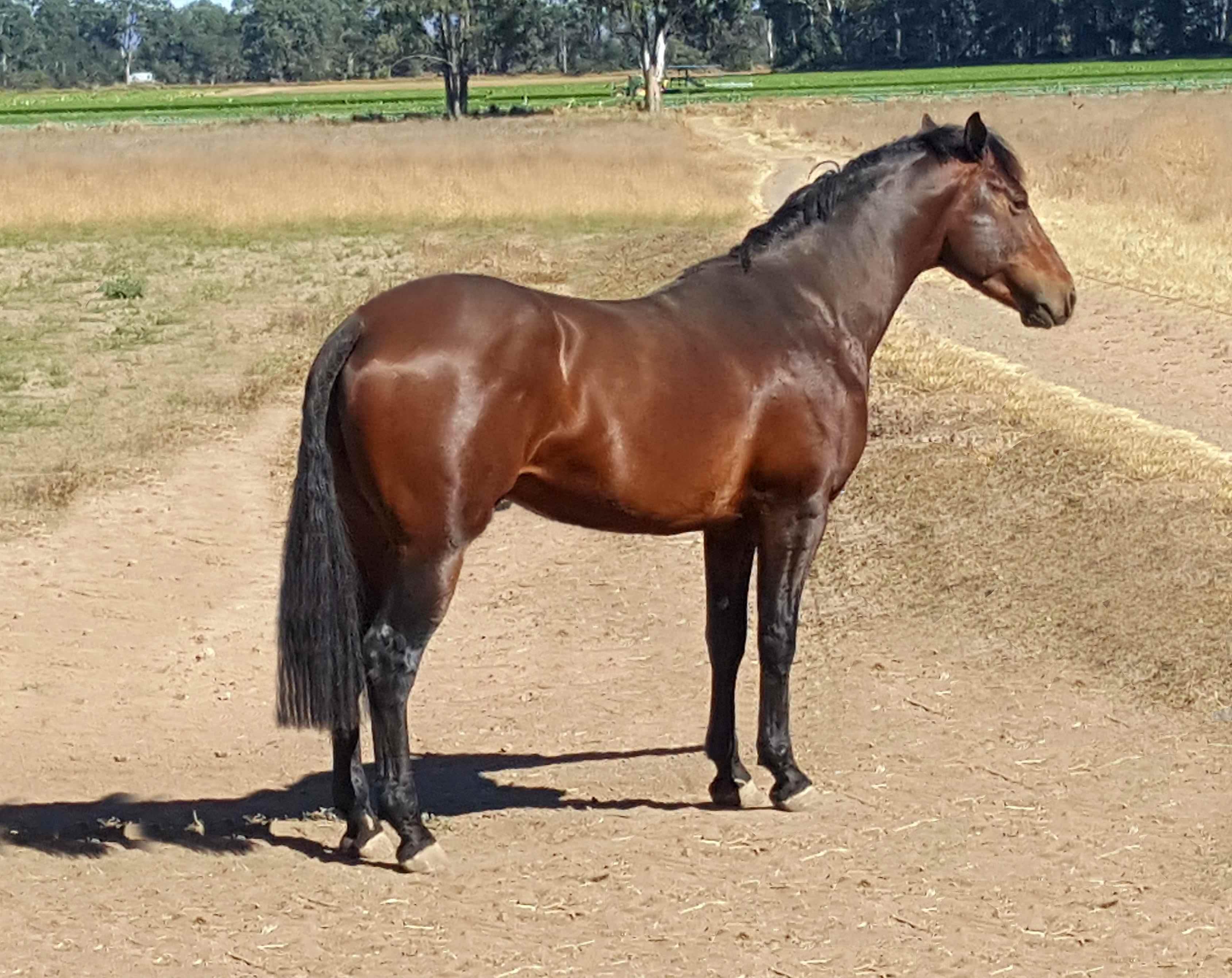 Our Waler colt taken in September 2017