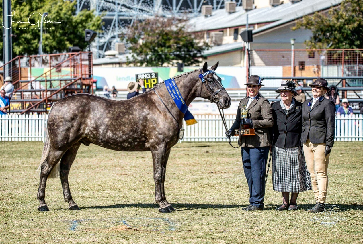 Wendara Silver Lining, Waler gelding, at the Queensland Royal 2017, led by Emily Wonka, pictured with sponsor Velda Chaplin of the Velda Chaplin Memorial Trophy and owner Penny Bieber