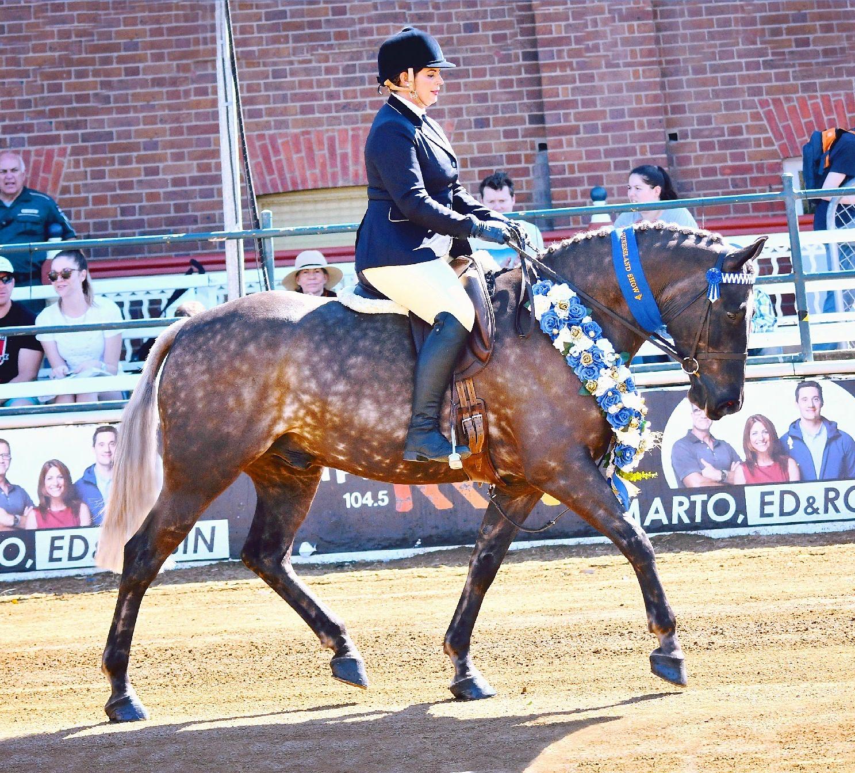 Wendara Silver Lining, Waler gelding, at the Queensland Royal 2017, ridden by Emily Wonka