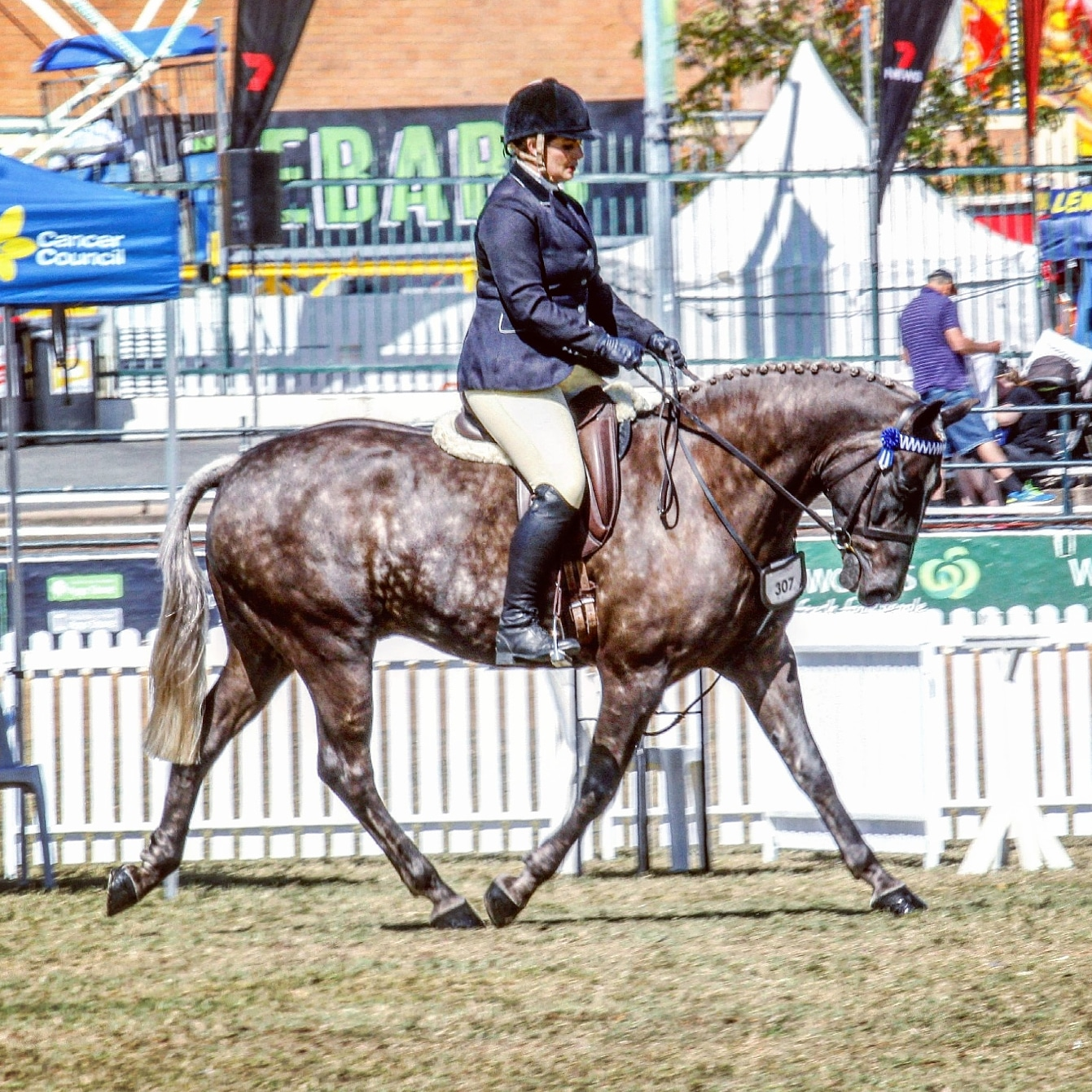 Wendara Silver Lining, Waler gelding, at the Queensland Royal 2017, ridden by Emily Wonka