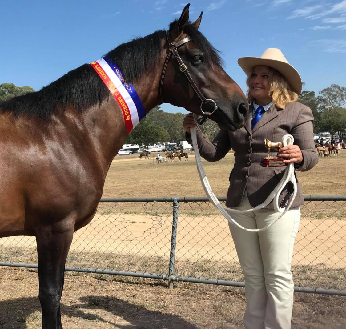 Trublu Trail Blazer, Waler colt at Gunning Show 2018