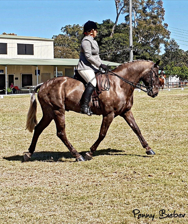 Wendara Silver Lining, Waler gelding, at the Gold Coast Show 2018