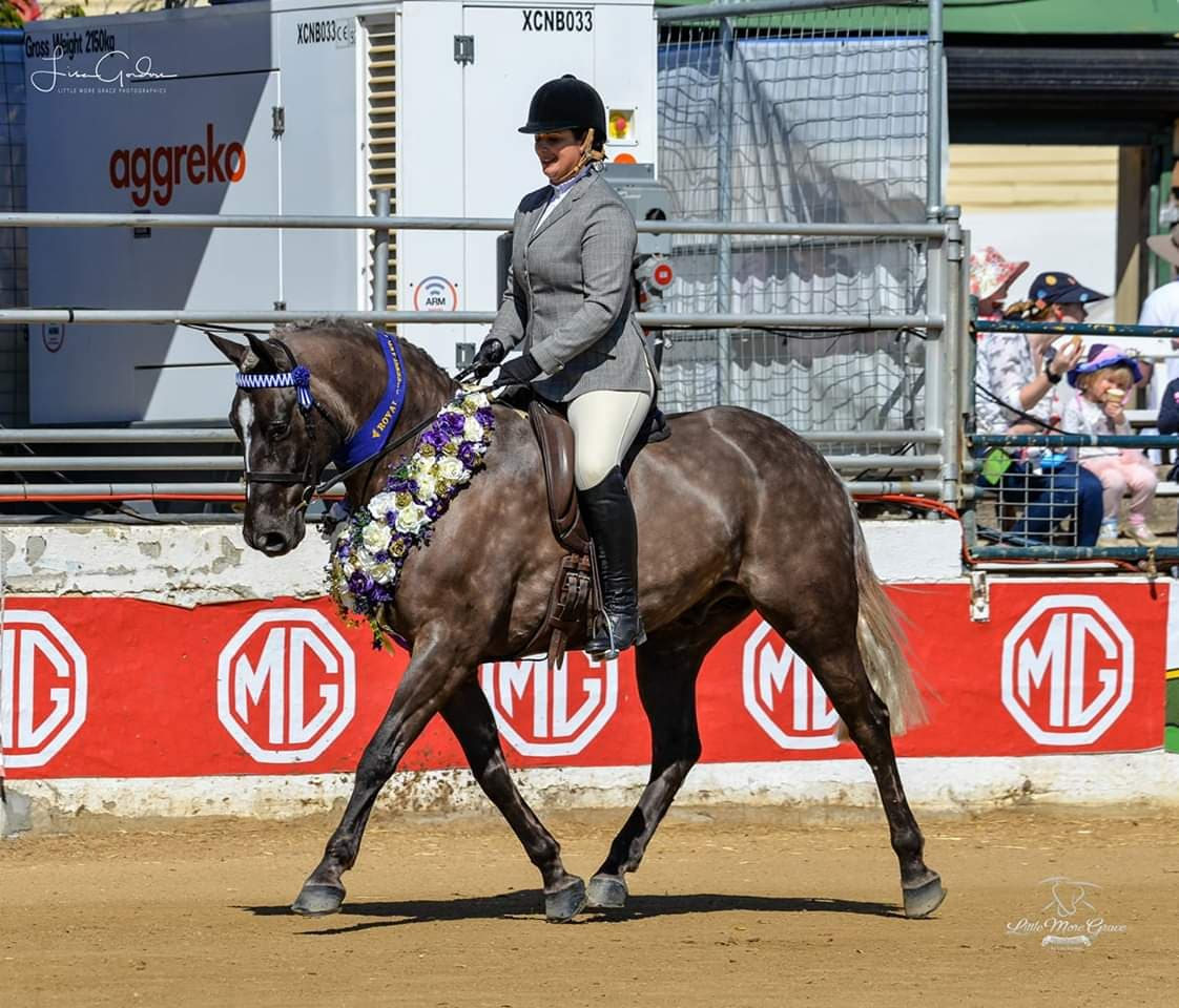 Wendara Silver Lining, Waler gelding, winning Best Ridden Waler Exhibit at the Queensland Royal 2018